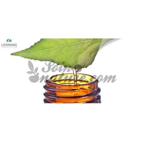 BETULA ALBA tintura homeopática Gotas LEHNING