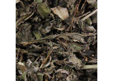 Mugwort (vulgar) Leaf HERBORISTERIE Artemisia vulgaris