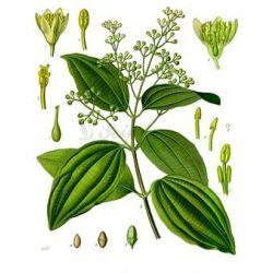 La canela de Ceilán TUBO 0 CM IPHYM Herboristería Cinnamomum zeylanicum