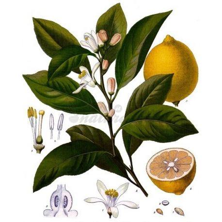 CUT Zitronenschale IPHYM Kräuterkunde Citrus Limonium