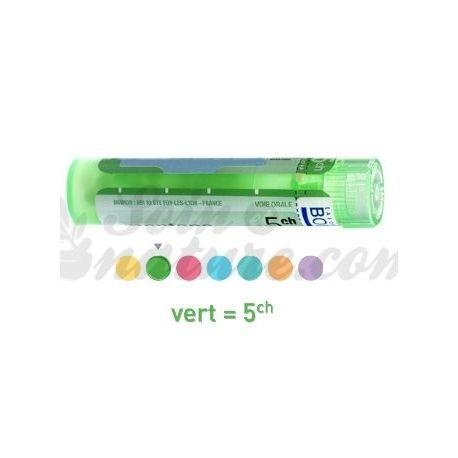 AGAVE AMERICANA 5CH Granules Tube HOMEOPATHIE BOIRON