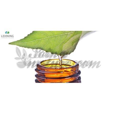 Berberis vulgaris Tinktur Tropfen Homöopathie Lehning