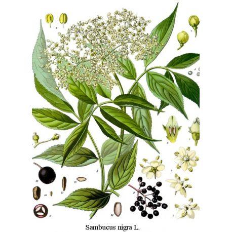 Sureau - Fleur mondée Paquet de 250 g