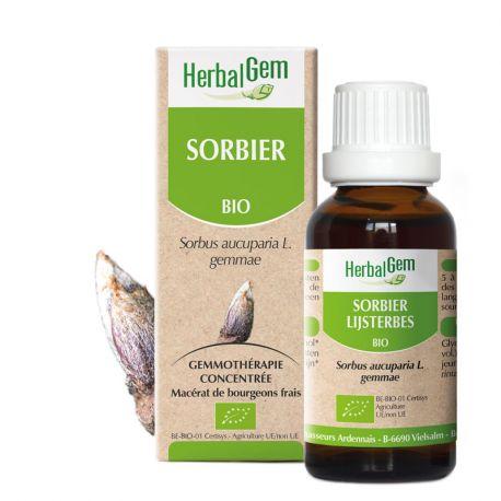 SORBIER sapling glycerine macerate BIO 30ml HERBALGEM