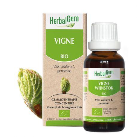 VINE sapling glycerine macerate BIO 30ml HERBALGEM
