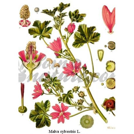Mauve - Fleur Entière Paquet de 250 g