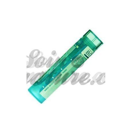 Apocynum cannabinum 200K MK 10MK Dosen oder Granulat Korsakov Verdünnung Homöopathie Boiron