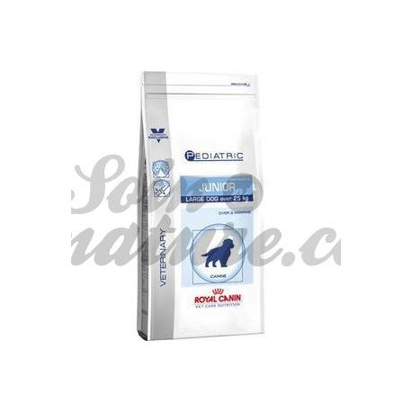 ROYAL CANIN JUNIOR LARGE 4KG PERRO