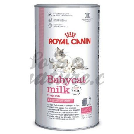 ROYAL CANIN NEUTERED BABYCAT MILK CHATON 300 G