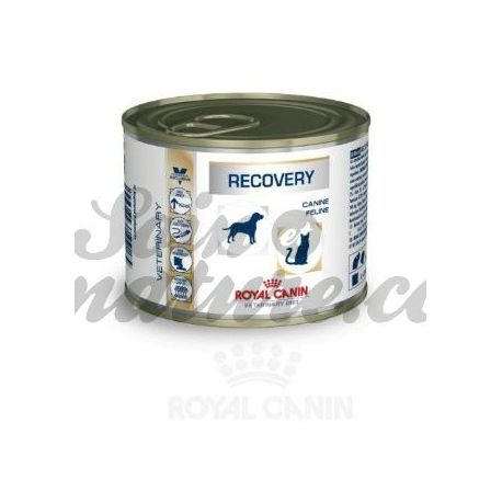 ROYAL CANIN VET DIET CAT DOG RECOVERY 12 boîtes de 195 g