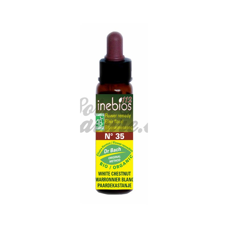 Bach inebios flower remedies white chestnut chestnut india bach bach inebios flower remedies white chestnut chestnut 10ml india mightylinksfo Image collections