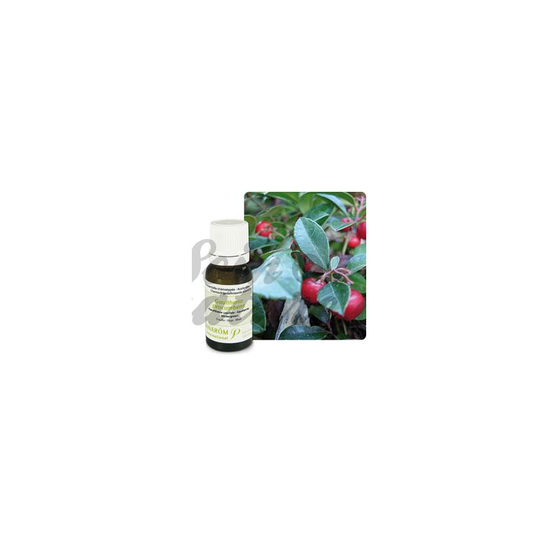 Pranarom huile essentielle gaultherie couch e 10ml - Huile essentielle de gaultherie couchee ...