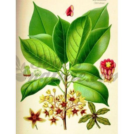 NOIX DE KOLA COUPEE IPHYM Herboristerie Cola nitida / C. acuminata