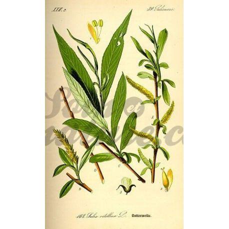 SAULE ECORCE COUPEE IPHYM Herboristerie Salix alba