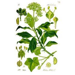 Ivy pack 250 g
