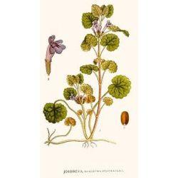 Hondsdraf CUP IPHYM Herbalism Hondsdraf