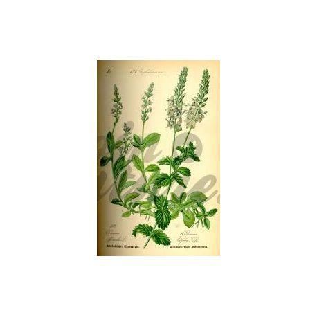 Veronica - pacote planta cortada 250 g