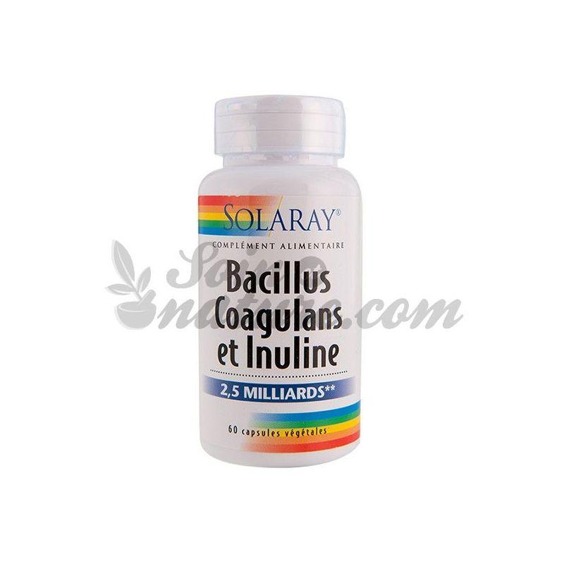 Solaray Bacillus coagulans inuline en 60 capsules bio apotheek