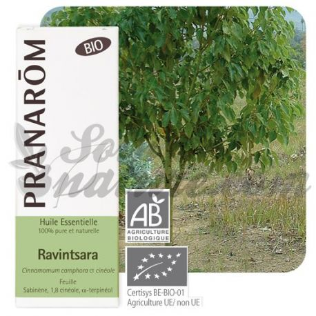 Organic 10ml de óleo essencial Ravintsara Pranarom