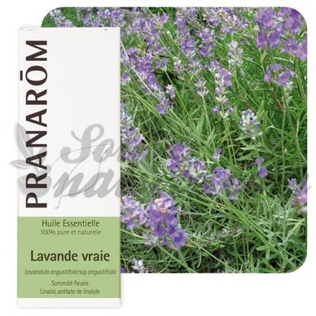 Óleo essencial de lavanda Lavandula officinalis verdadeira 10 ml Pranarom