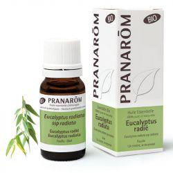 Bio Eucalyptus radiata ätherisches Öl 10ml PRANAROM