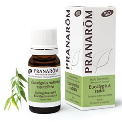 Biologische etherische olie Eucalyptus radiata 10ml PRANAROM