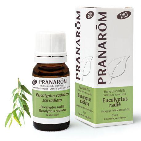 Organic essencial Eucalyptus radiata óleo 10ml Pranarom