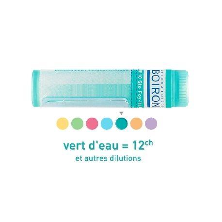 Scrofularia nodosa 12CH Granules Dose HOMEOPATHIE BOIRON