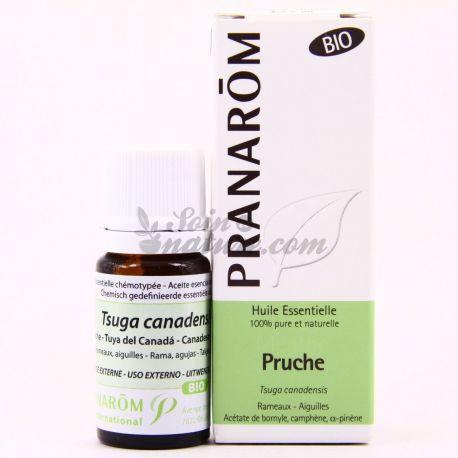 Huile essentielle BIO Pruche Tsuga canadensis PRANAROM 5ml