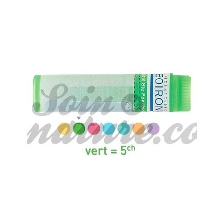 Nux moschata 5CH Globules Dose HOMEOPATHIE BOIRON