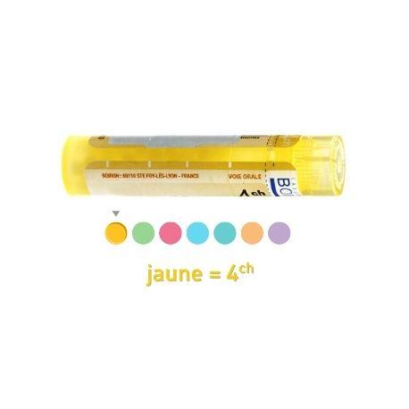 UVA URSI 4CH Granules Tube HOMEOPATHIE BOIRON