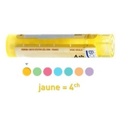 ANGELICA ARCHANGELICA 4CH Granules Tube HOMEOPATHIE BOIRON