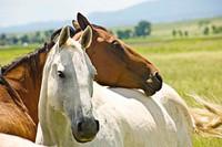 Les médicaments Boiron chevaux