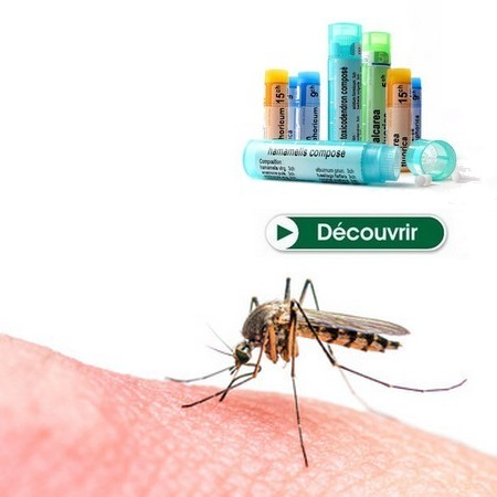 piqure insecte homeopathie