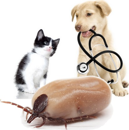 anti cat dog ticks