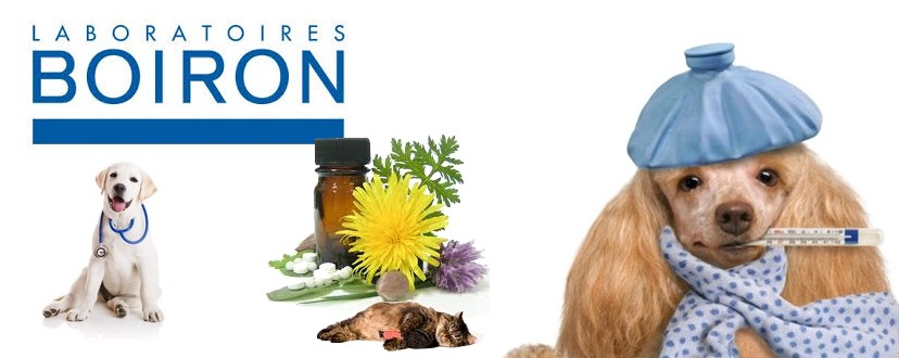 Veterinaire homeopathie in uw online apotheek