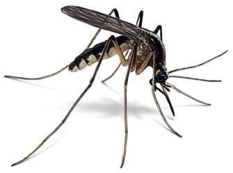 anti mosquito natural remedies